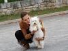 BOB puppy Lipica
